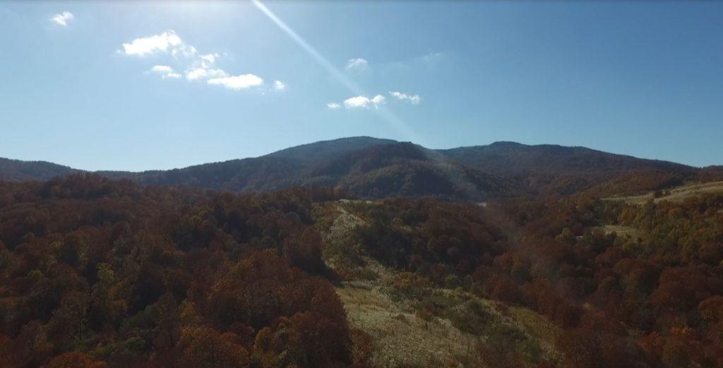 クマゲラの森